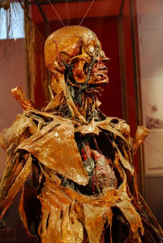 1000 id es sur le th me m decine v t rinaire sur pinterest technicien v t r - Fragonard musee paris ...
