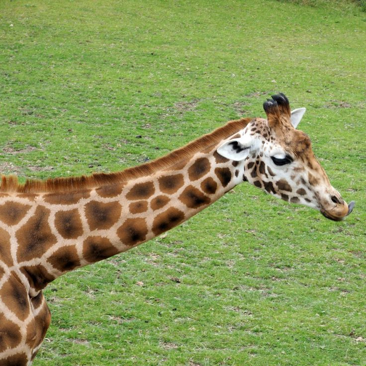 Our day out at Marwell Zoo - Family Days Out