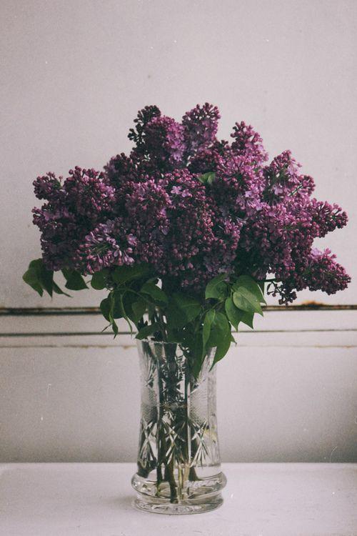 Purple Flowers XO