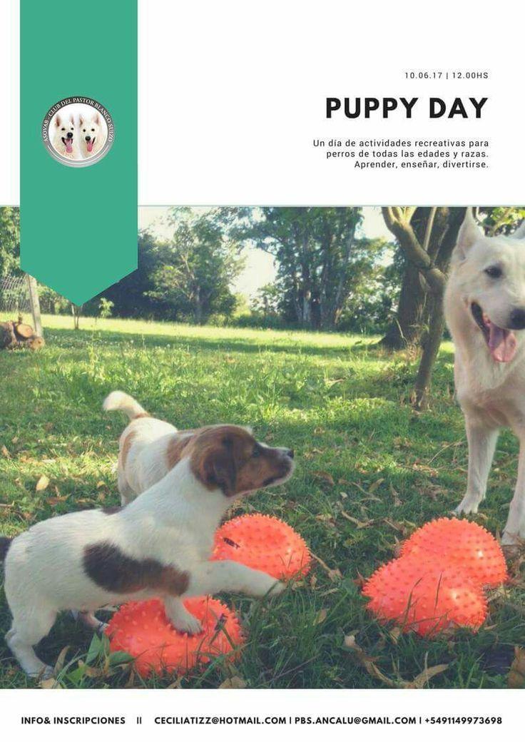 Puppy day