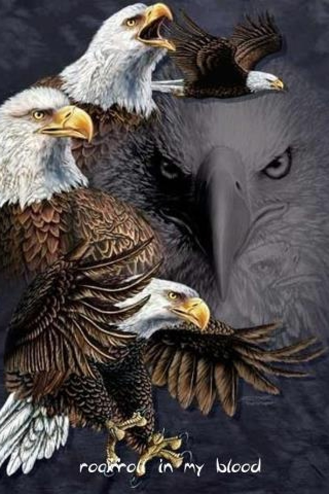 Eagles                                                                                                                                                                                 More