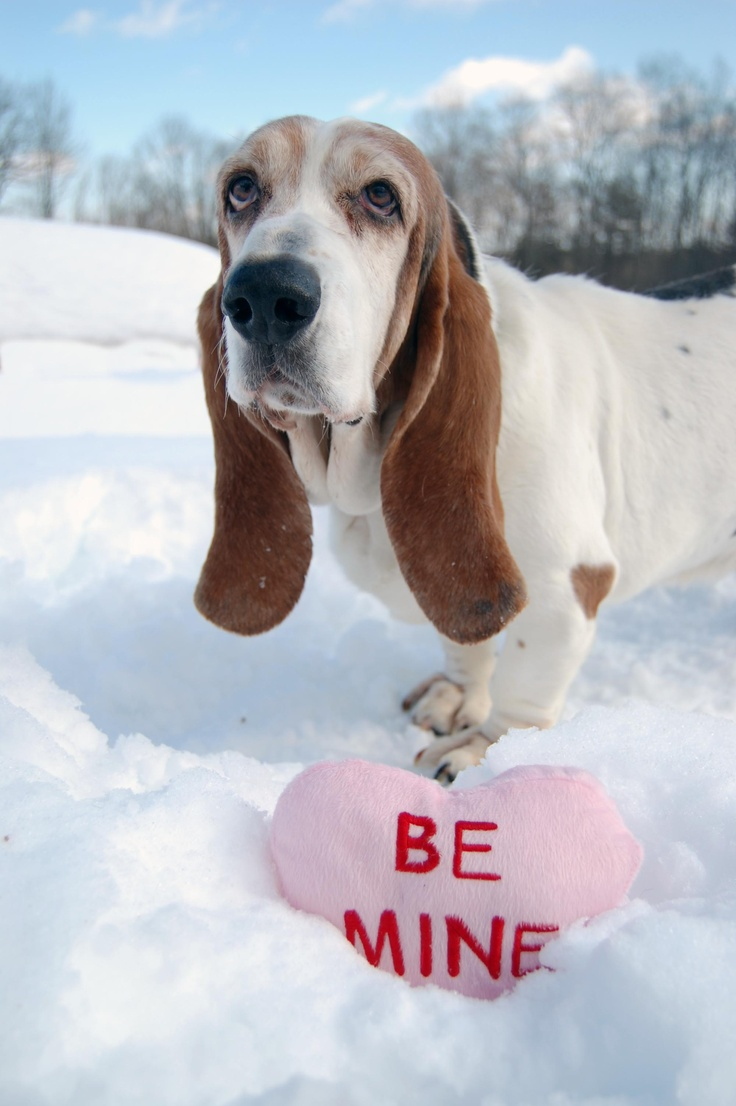 All you need is love...and a dog. nhspca.org: Gifts Nhspca, Animal Lovers,  Basset Hound, Adoption Angel, Pet, Wonder Valentines, Valentines Gifts, Angel Valentines, Valentines Day Gifts
