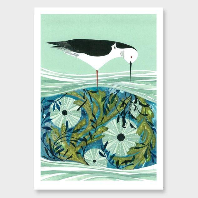 Kina and Pied Stilt Art Print by Holly Roach