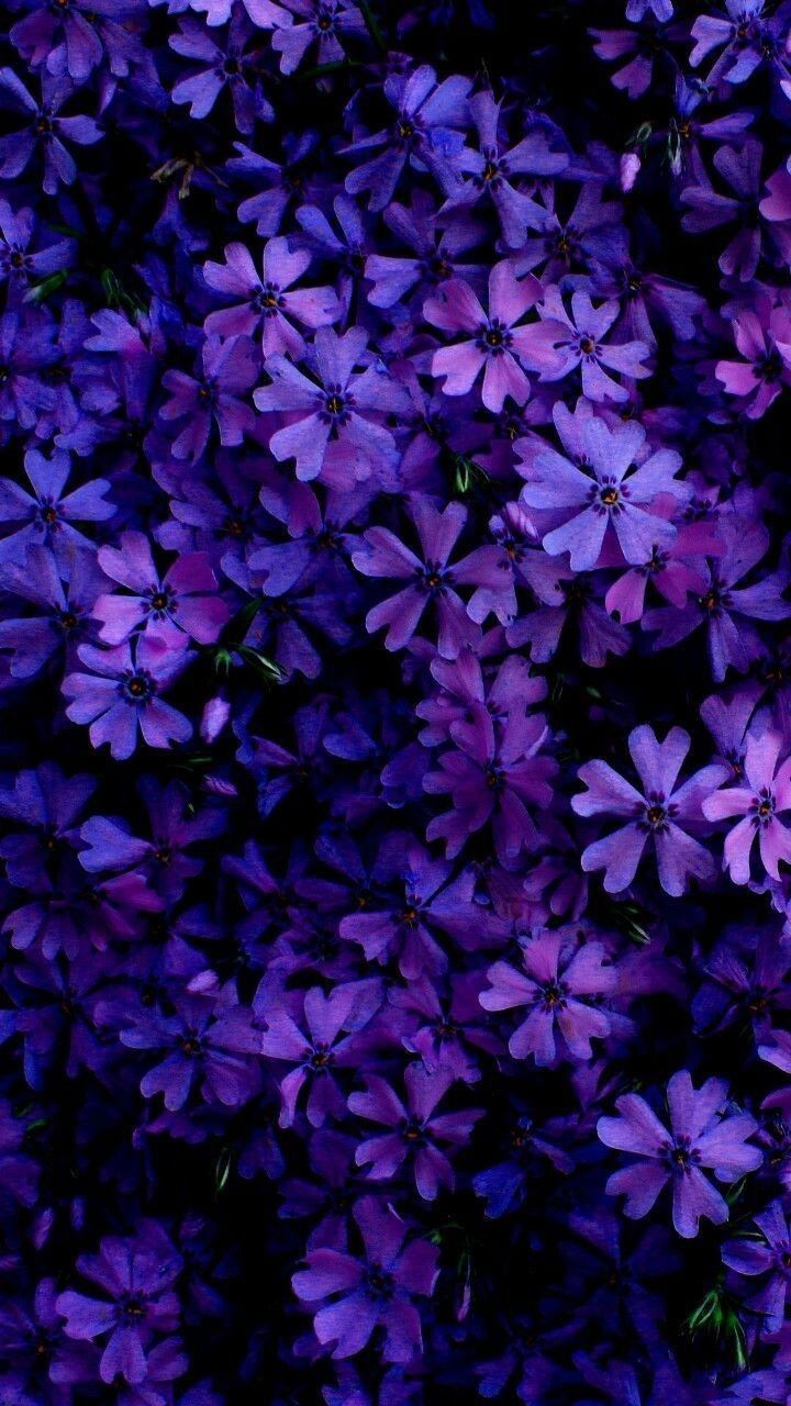 Lila Blumen Schoner Hintergrund Blumen In 2021 Purple Flowers Wallpaper Purple Wallpaper Flower Wallpaper