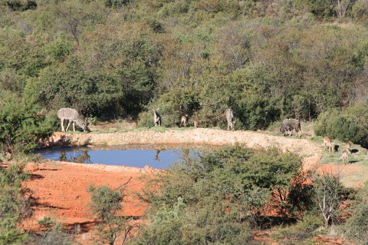 # Thaba Tshwene Game Lodge - Enjoying #Nature from the #Outside #Deck at www.thabatshwene.co.za
