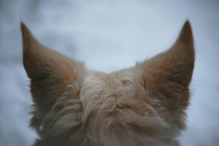 Urechile de elf ale lui Xavi