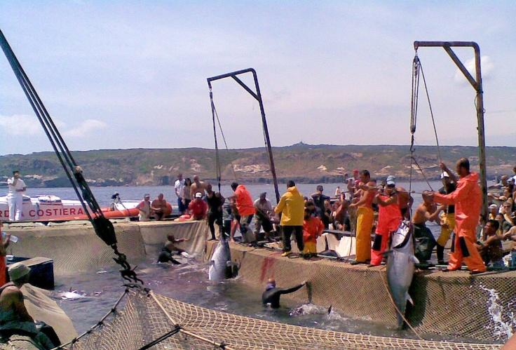 Tonnara a Carloforte: Una attività di pesca tradizionale che si sta ormai perdendo: la tonnara - Foto di Leonardo Tunesi #ISPRA