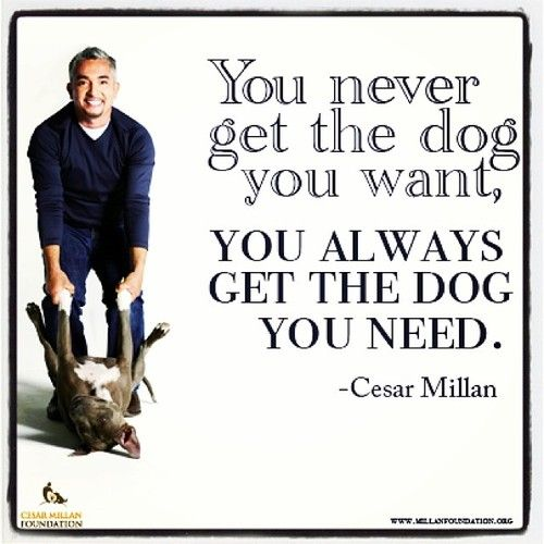 #cesarmillanfoundation #givingtuesday #juniormillan