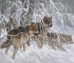 Larry Fans, Painting Wolves, Grey Wolves, The Edging, Wildlife Art, Gray Wolves, Wolf Pack, Animal Artworks, Winter Details