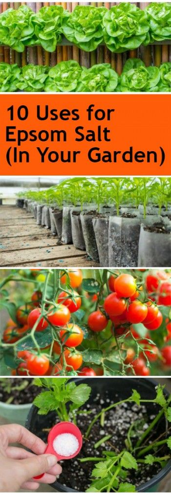 17 Best ideas about Epsom Salt For Plants on Pinterest Gardening