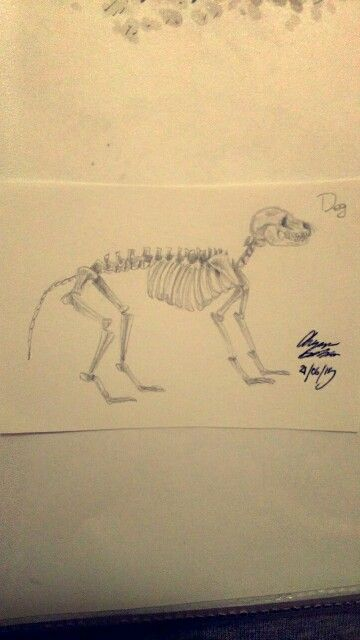 Dog's Skeleton