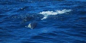 Tour Review: Dolphin Watch & Cave Tour with Dreamwave - foodandphotosrtw.com