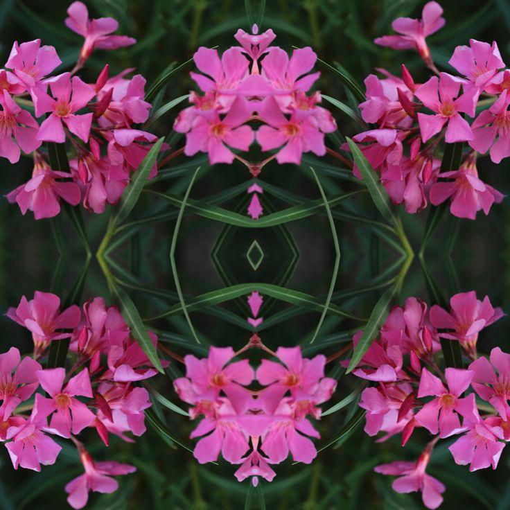 S U M M E R T I M E ! New pattern Pink Maui is here💞🌸💞#strövadesign #digitalart #surfacepattern #floralprint #print #pattern