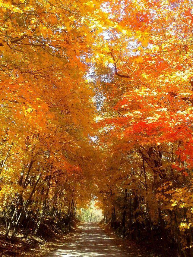 1062 best Autumn, Leaves, Pumpkins, Cool Nights, Halloween