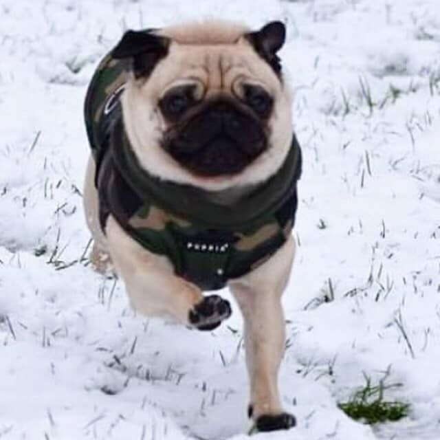 Puppia Fleece Lined Camo Mountaineer Coat Available At Www