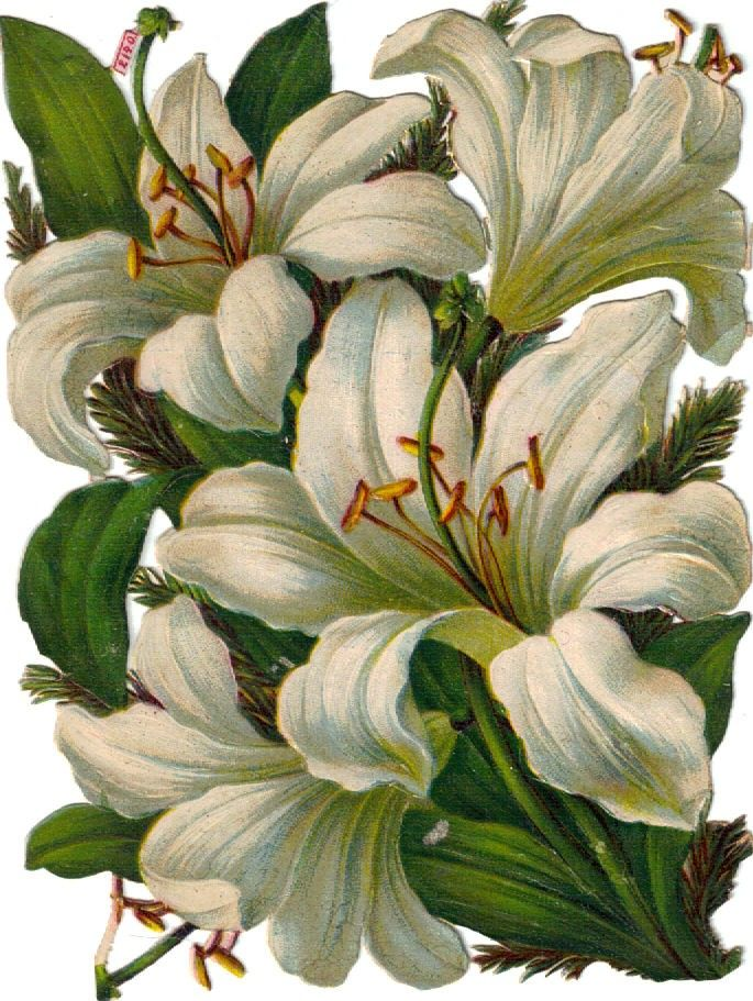The Vintage Moth..: spring lilies!