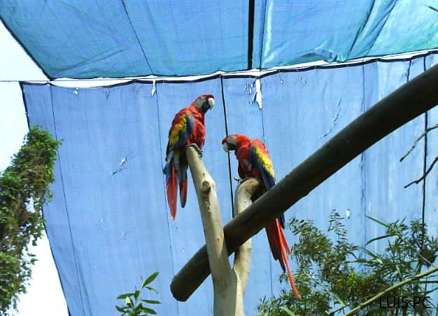 Aves del zoológico de San Juan de Aragón. (Ciudad de México) ~ Mira tu México...