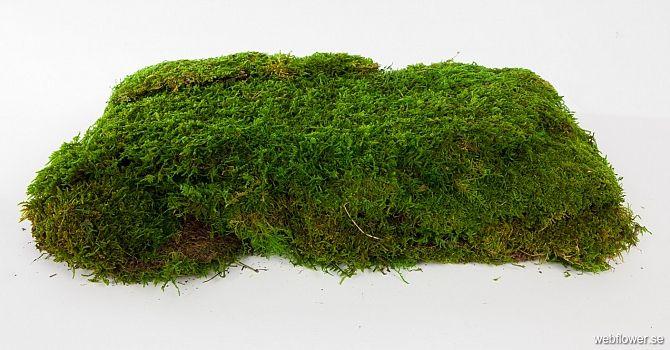 Mossa konserverad 1 kvm 2cm - Tillbehör - webflower.se