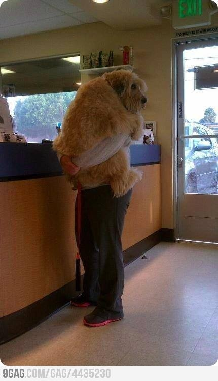 Love it: Doggie, The Doctors, So Cute, Pet, Big Baby, Leaves Me, Puppie, Funny Animal, Big Dogs