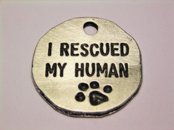 I rescued my human. Perfect.