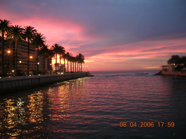 Sunset and palm trees in Vina del Mar.