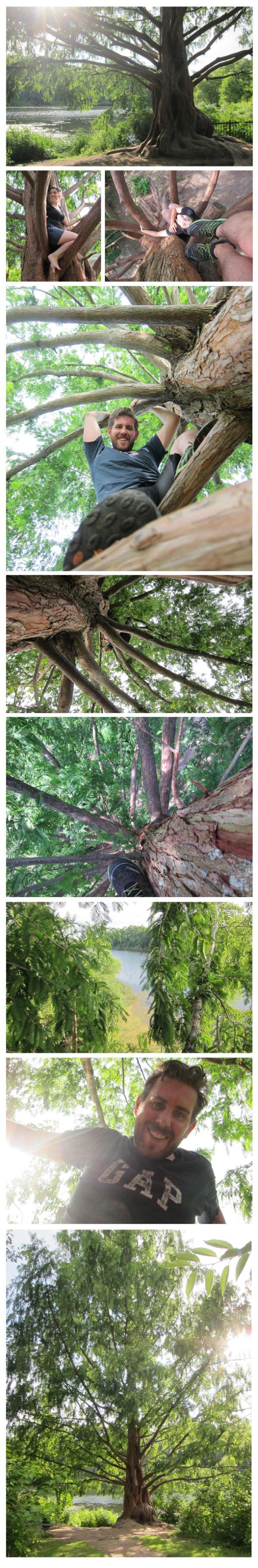 #26 - Climb a tree.  #100Thingsin2013