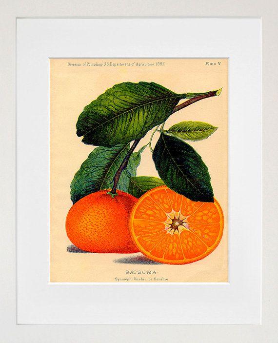 Orange Kitchen Decor: 1000+ Ideas About Orange Kitchen Walls On Pinterest