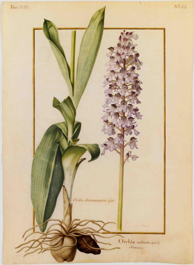 Exposition Orchidées Au Jardin Des Plantes