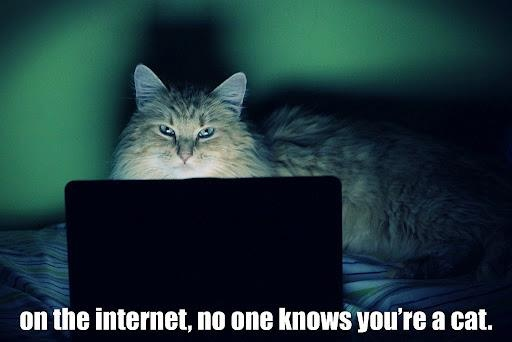 You are a cat. And no one knows it.Internet Cat, Laugh, Funny Cat, Pets, Funny Stuff, Humor, Kitty, True Stories, Animal