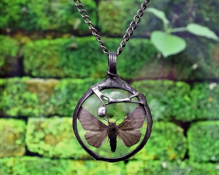 moth necklace, night butterfly, real insect, terrarium necklace, handmade by pentaxPL on Etsy
