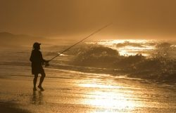 A compilation of some great surf fishing tips to help you start finding and hooking lots more fish.  Find out which baits are best for which fish,...