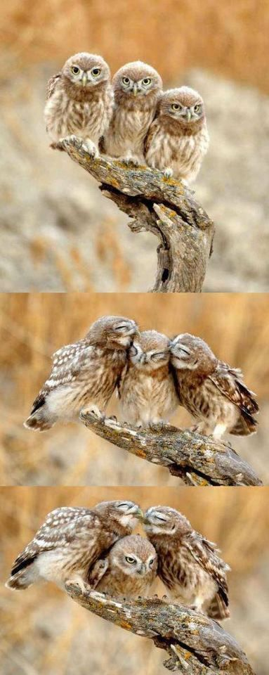 Owl Family.  I just adore these three amigos!!