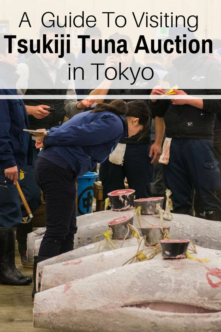 A Guide to Visiting the Tuna Auction at the Tsukiji Fish Market in Tokyo | Ravenous Travellers Travel Blog