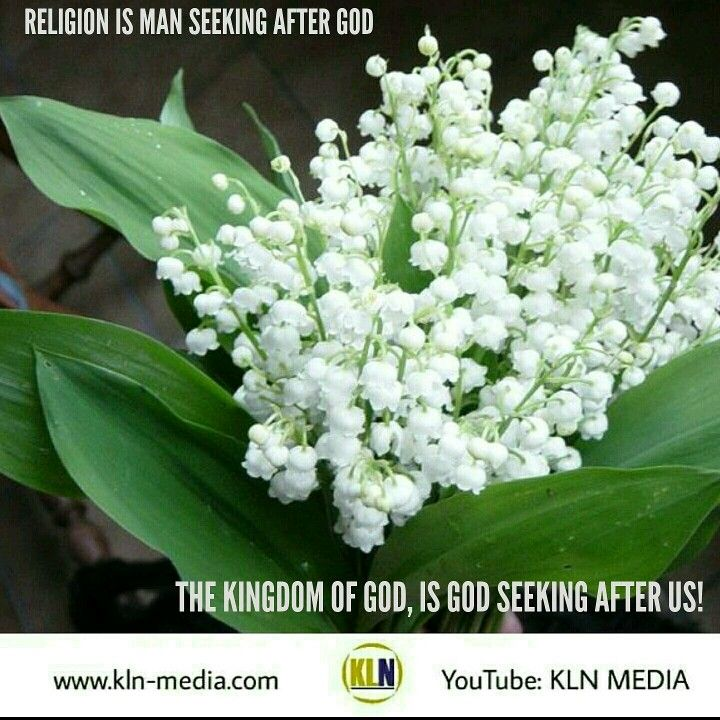 Kingdom Living Now  1 John 4:19 NKJV We love Him because He first loved us.  John 15:16 NKJV You did not choose Me, but I chose you and appointed you that you should go and bear fruit, and that your fruit should remain, that whatever you ask the Father in My name He may give you.  Join us now, for our Question & Answer session on 'Understanding the Kingdom of God.' We begin at: 7:30pm/est.  Join us at: Kingdom of Heaven Embassy Ministries - 1210 Midway Blvd. Units 17-18,  Mississauga ON L5T…