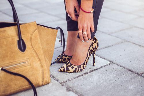 Leopard x camel