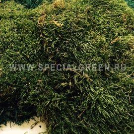 Мох Индиан Пласты, упаковка 0,5 Кг/ Moss-Sheet Sf 0,5 Kg