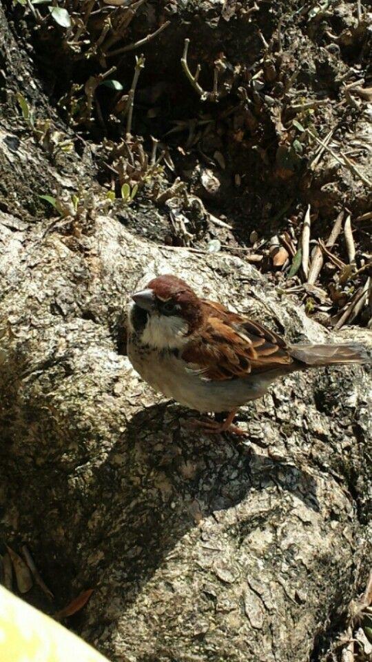Un uccelli che si posarsi di un ramo non ha mai paura che il ramo si rompa ..perché la sua fiducia non e'nel ramo ma nelle sue ali .....