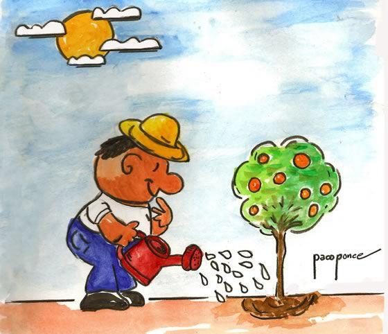 IMPORTANTE En el caso de las plantas, ya sean plantadas directamente sobre el suelo o en maceta, deberán regarse sobre la base directamente, para que el agua penetre mejor. Riega de forma que el agua caiga poco a poco.