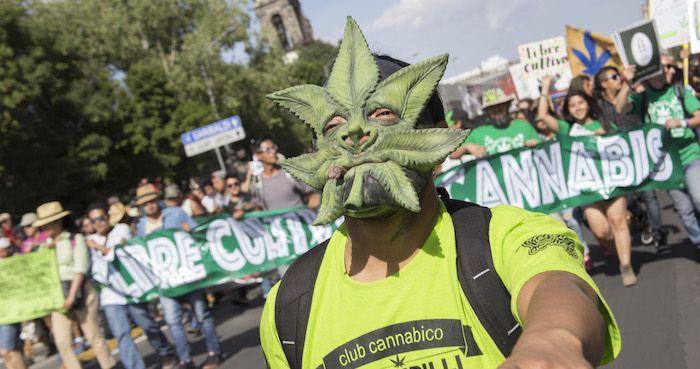 La trascendencia de la decisión del Senado no es solo que se permita el uso médico de la mariguana sino que se da un primer paso para cambiar el absurdo paradigma de combate a las drogas en este país. Foto: Cuartoscuro