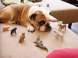LOL животные смешные животные фотографии животных Смешные картинки Дерпи очаровательны животных LOL фотографии смешные фотографии животных Дерпи животных