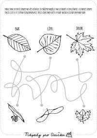 Bludiště listy a plody