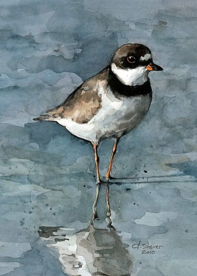 """Semipalmated plover watercolor ARCHIVAL MATTED PRINT - 5 X 7"""" Print - 8 X 10"""" Archival White Mat - Vertical Orientation - Signed & dated - Clear sleeve and backing - Ready to gift as is"""