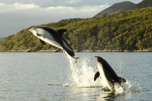 Surpresas da Patagônia chilena: a espantosa beleza da Baía Wulaia - http://colunas.revistaepoca.globo.com/viajologia/2013/03/22/patagonia-baia-wulaia/ (Foto: Haroldo Castro/ÉPOCA)
