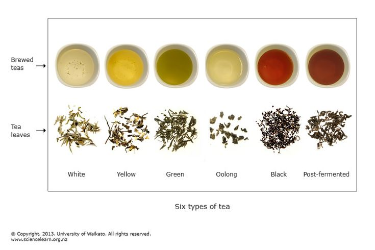 All Types Of Tea The Six Main Types Of Tea Are White