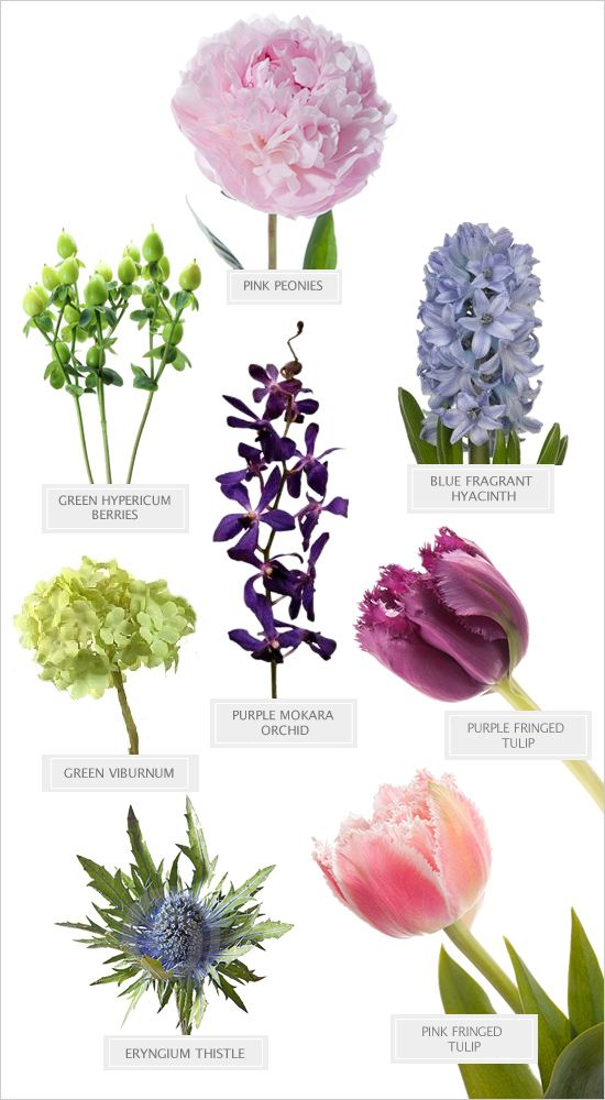 top  best purple spring flowers ideas on   pianese, Beautiful flower