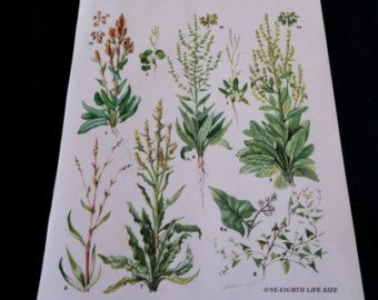 KRUIDEN Vintage botanische afdrukken antiek, plant afdrukken botanische print, bladwijzer art print, kruid planten plant muur print