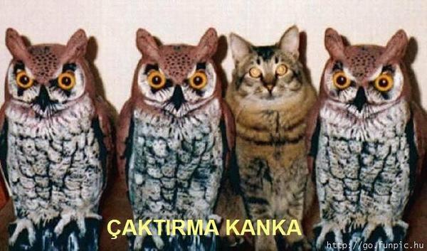 kanka,baykuş,kedi,komik,inci caps,inci sözlük,mizah,caps
