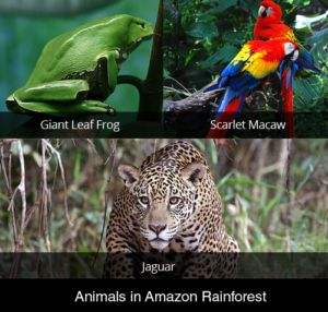Animals That Live in the Amazon | Amazon Rainforest Facts | Cool Kid Facts