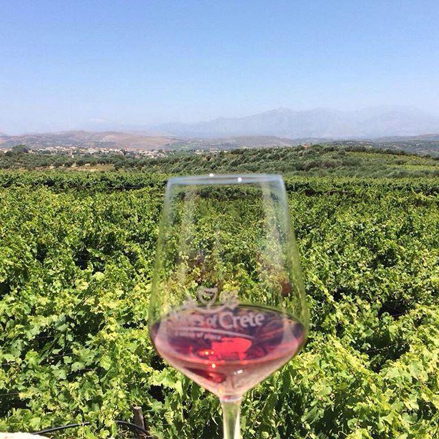 True #Cretan wine & vineyards at #KtimaStilianou.  Photo by @beautyfalse
