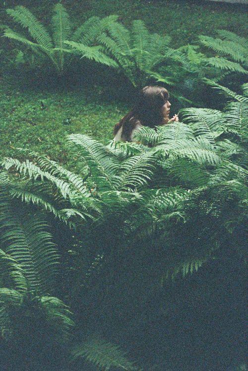 : Ferns Garden, Gardening Ideas, Green Ferns, Photoshoot Inspiration, Ferns Nature, Backyard